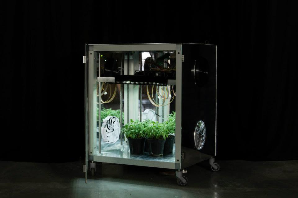 Meg Micro -Experimental-Growing