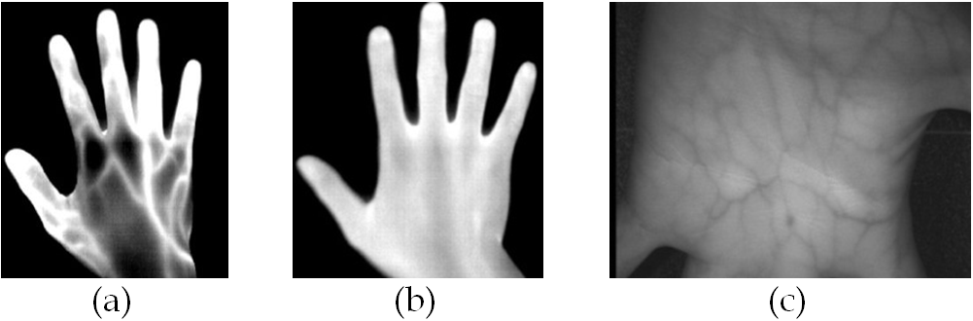Biometria-Vene