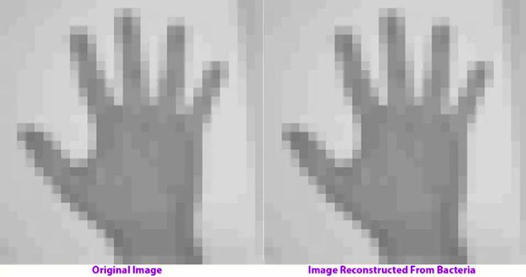DNA dei batteri si potrà visulizzare attraverso delle GIF
