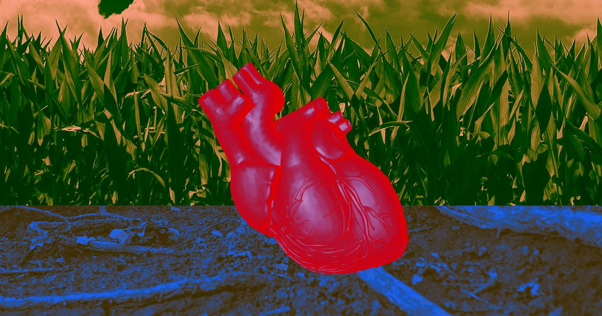 Un cuore creato in laboratorio può battere come un cuore vero
