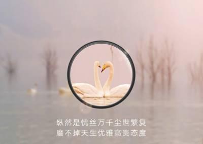 Zoom Huawei P30 Cigni