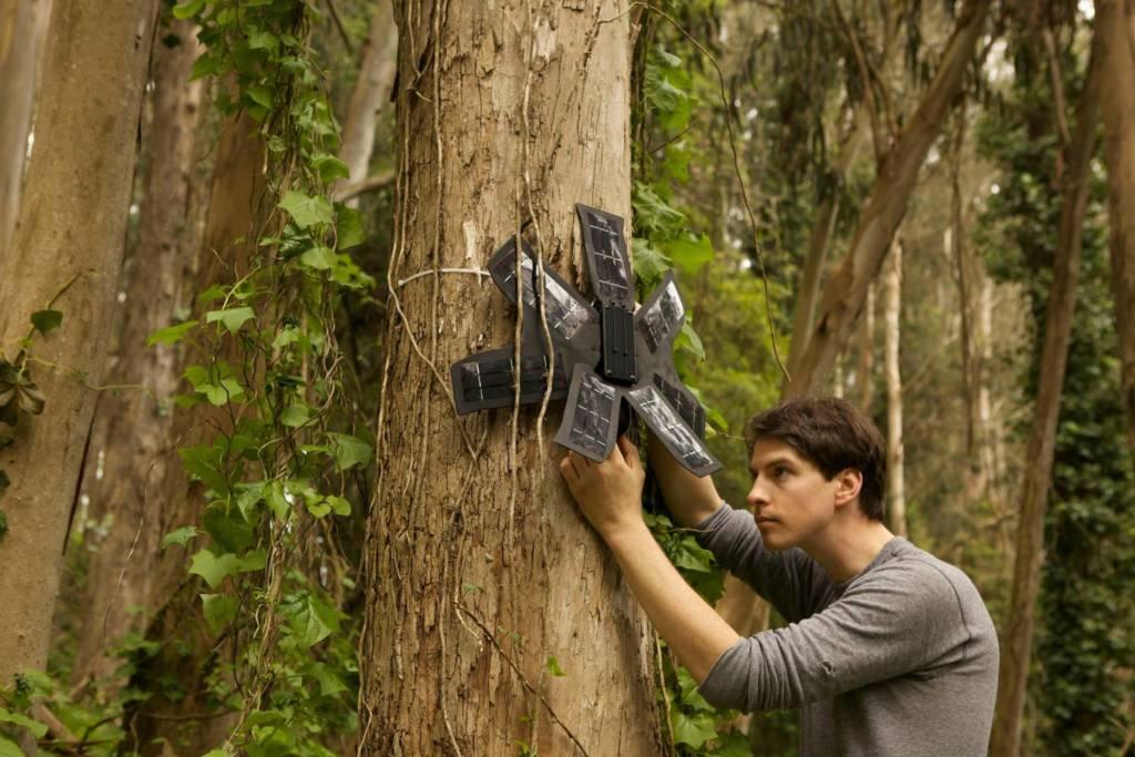 vecchi Cellulari proteggono alberi Rainforest Connection