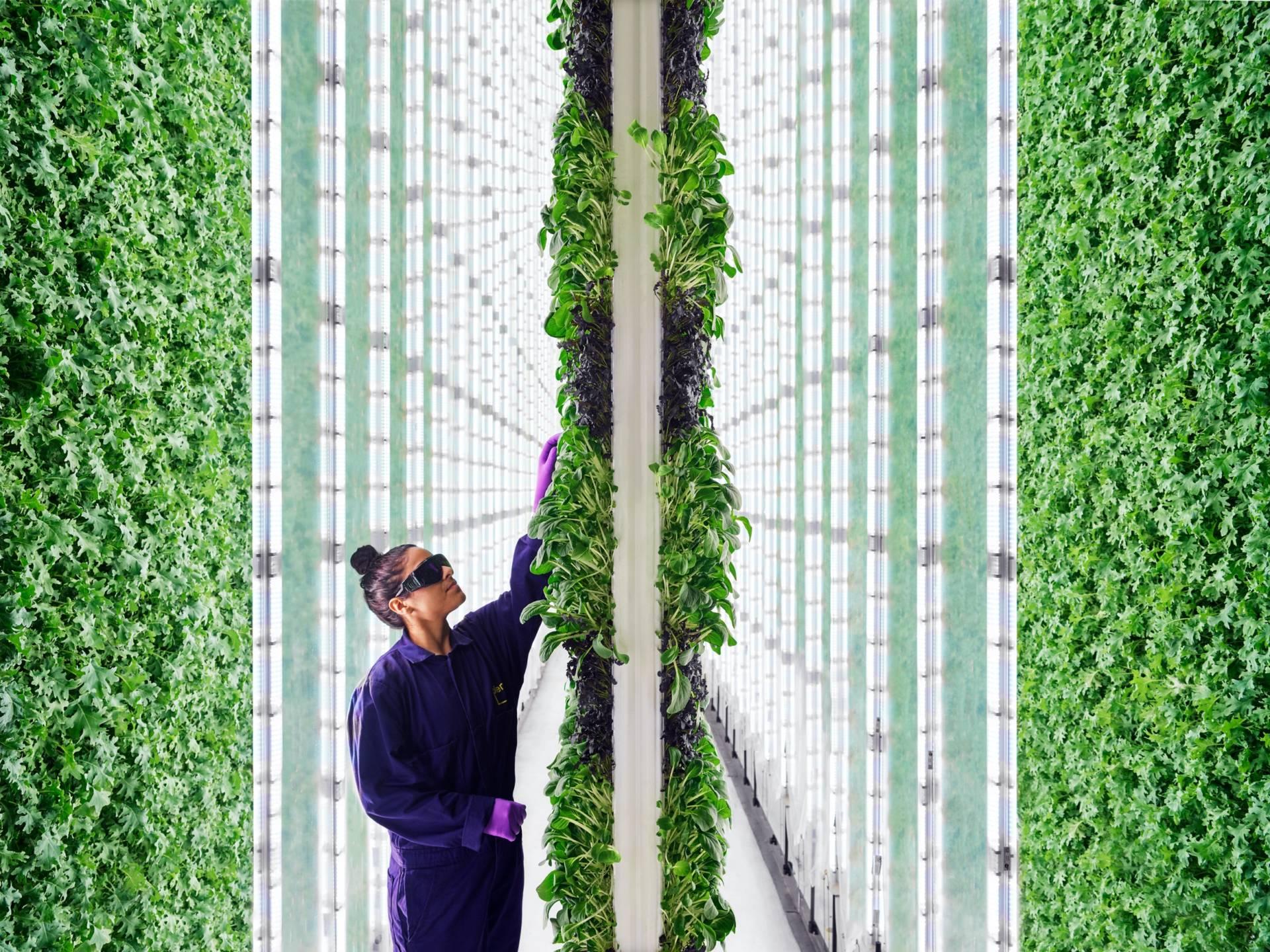 Agricoltura del futuro: verticale e robotizzata