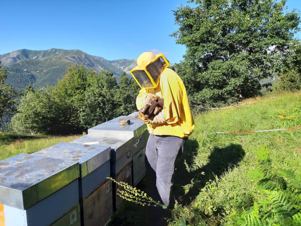 Sustain Hive
